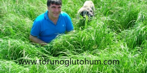 Teff Grass Tohum Fiyatları