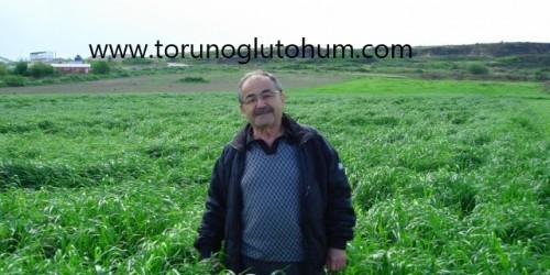 Süt Otu Tohumu